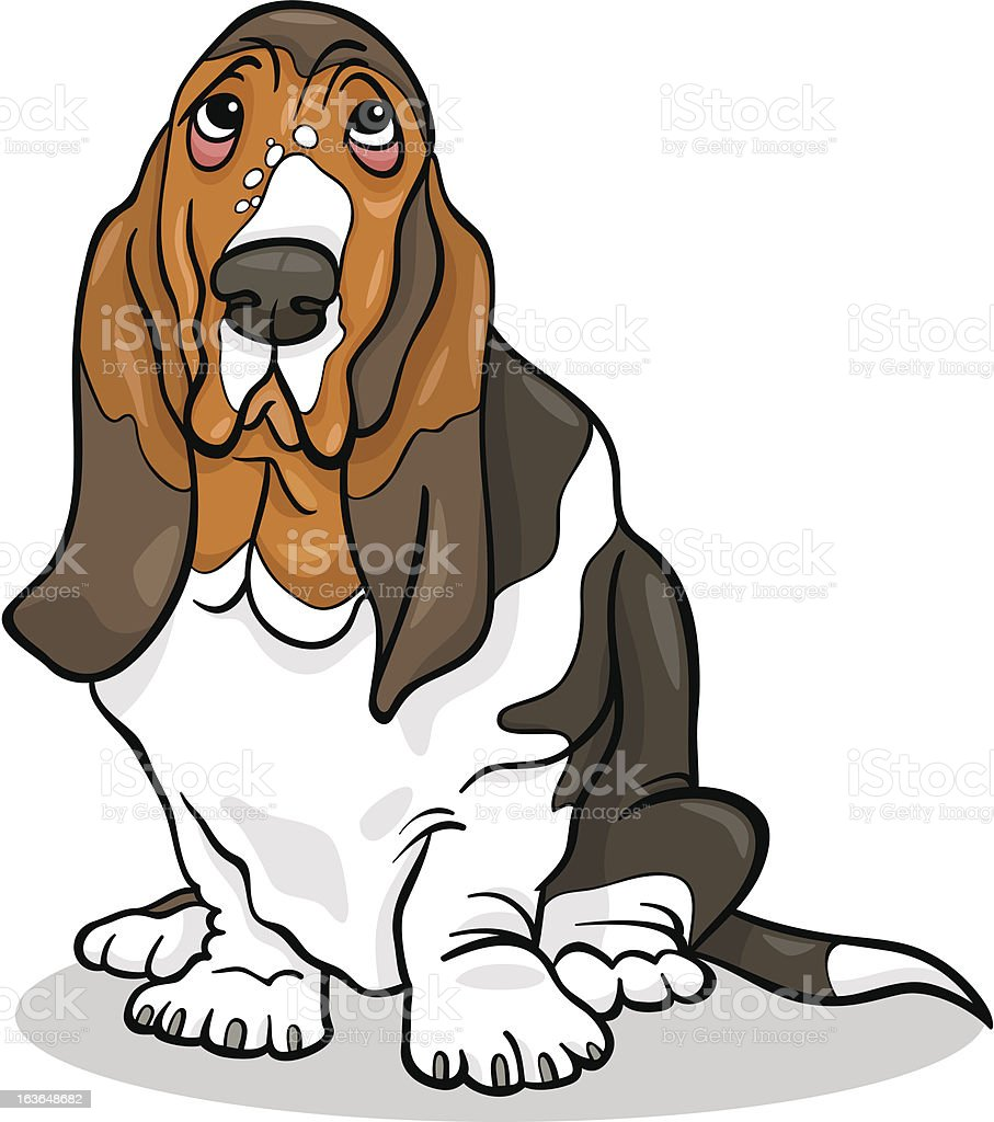 royalty free basset hound clip art vector images illustrations rh istockphoto com basset hound birthday clipart Basset Hound Outline
